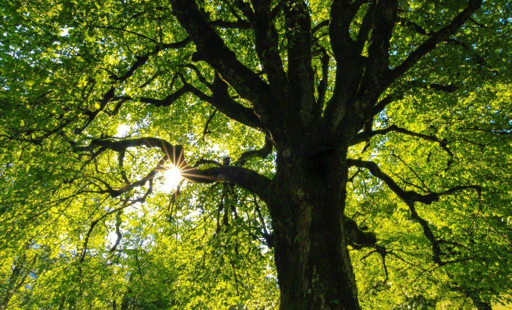 Seneca Springs Wellness | Tree